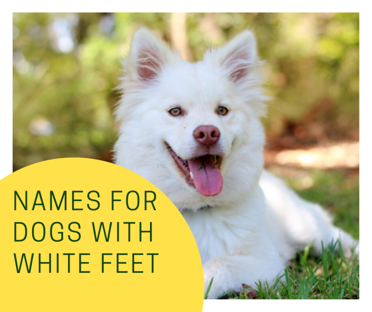 50 Names for Dogs With White Feet