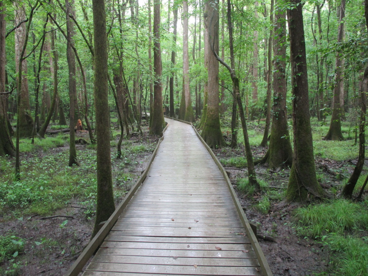 Boardwalk at Congaree National Park