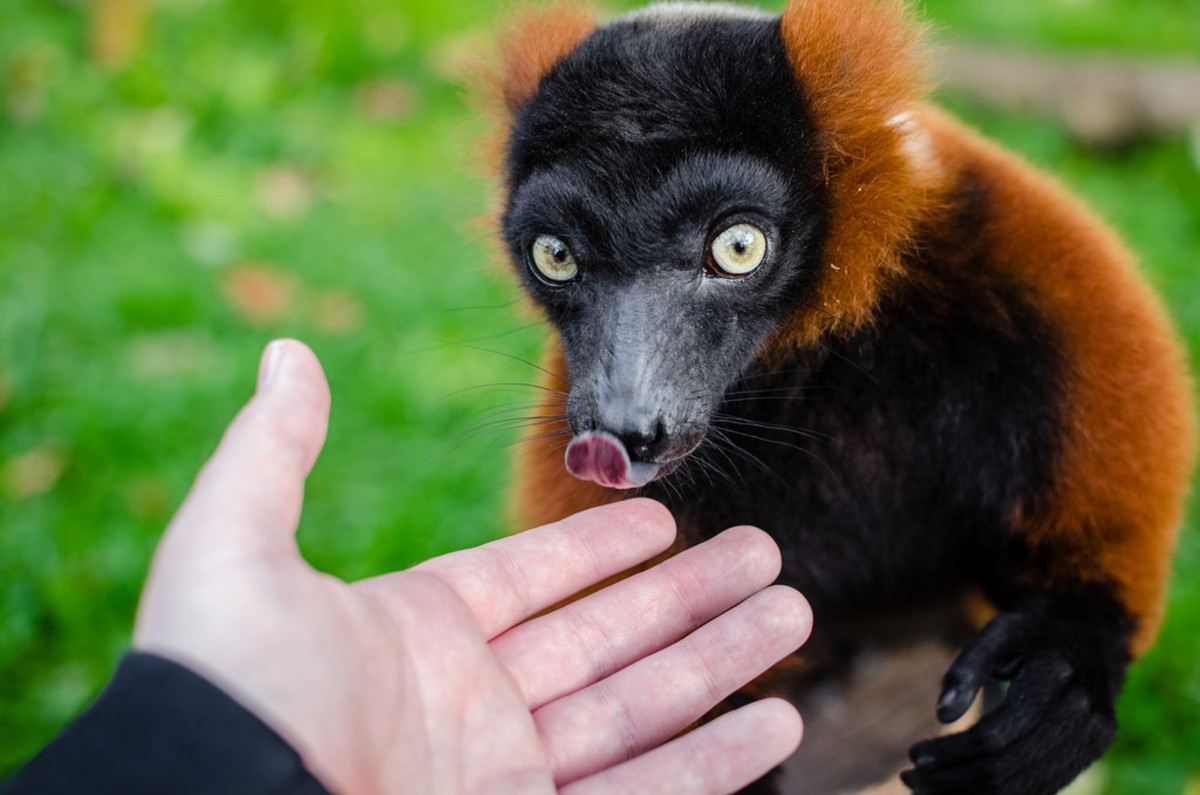 Exotic Pets Actually Aren't Hard to Care For