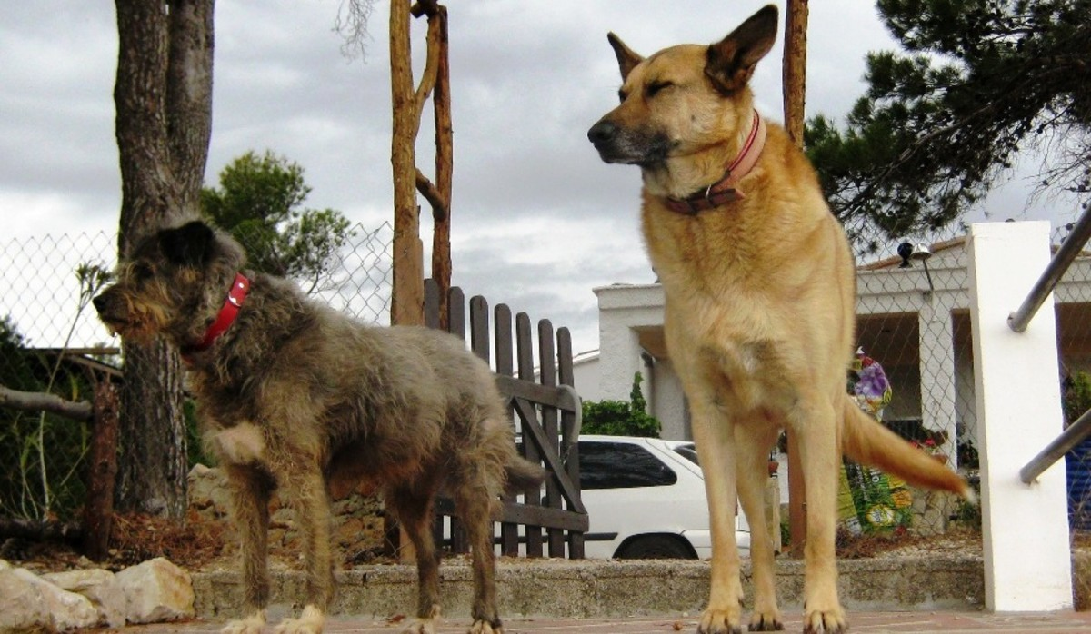 how-i-give-my-dogs-a-daily-pill-the-no-fuss-way