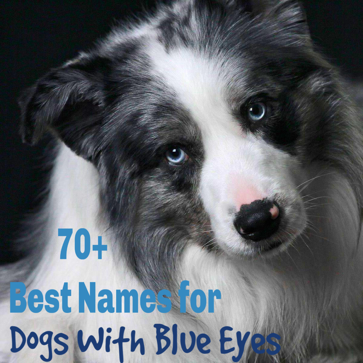 90 Unique Names for Dogs With Blue Eyes