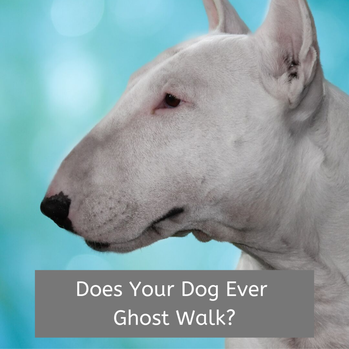 Does your dog ever go into trances and seem to walk in slow motion?