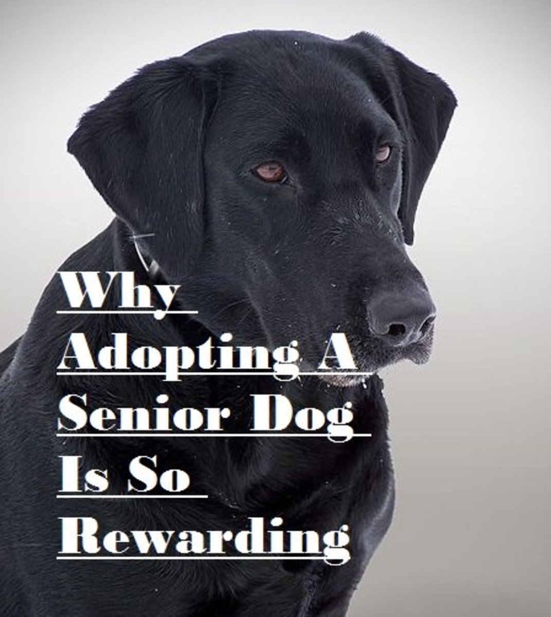 Why I Adopted a Senior Dog and Why You Should Too