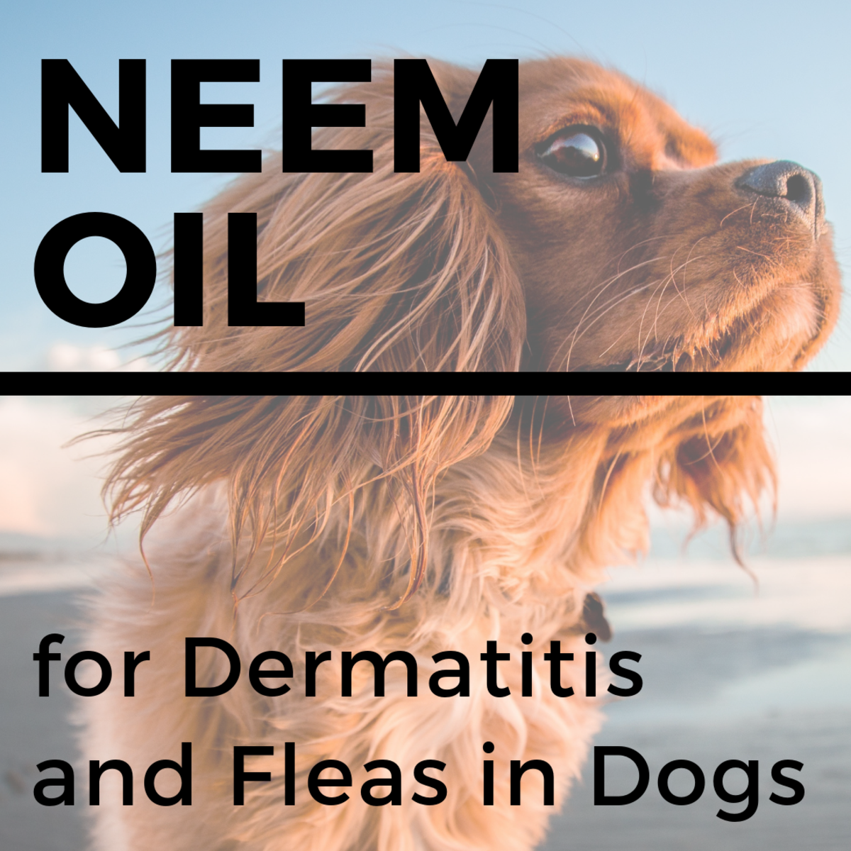 Neem Oil for Dogs Stops Itching, Heals Skin, and Repels Fleas and Mosquitos