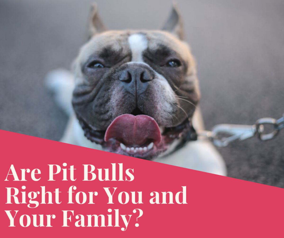 Read on to learn if Pit Bulls are the right breed for you and your family.