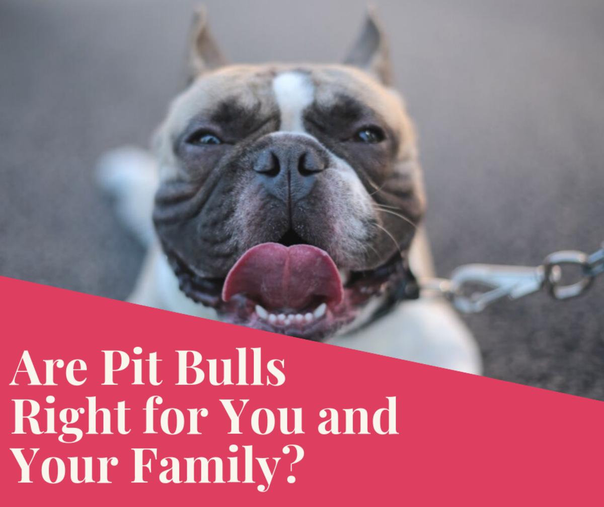 Pitbulls as Family Dogs