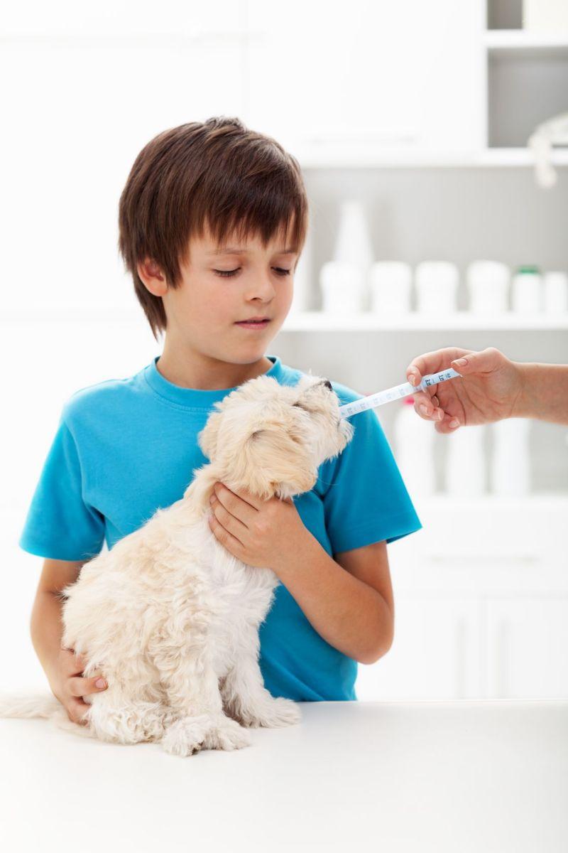 Conventional Veterinary Care vs. Holistic Pet Care