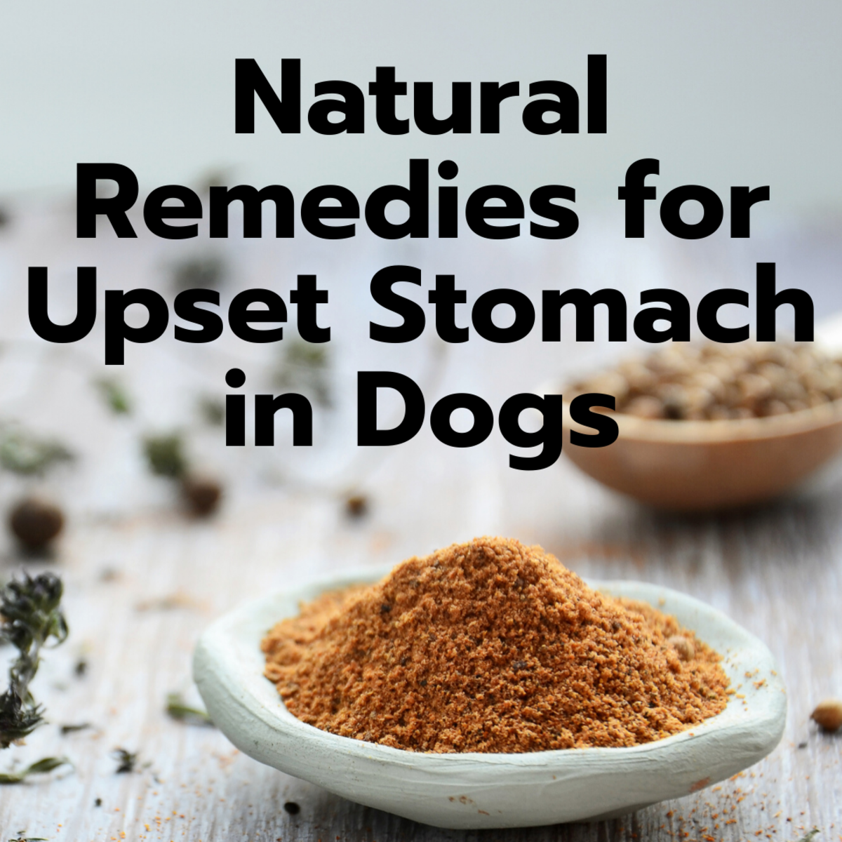 Natural Remedies for Dogs With Upset Stomach