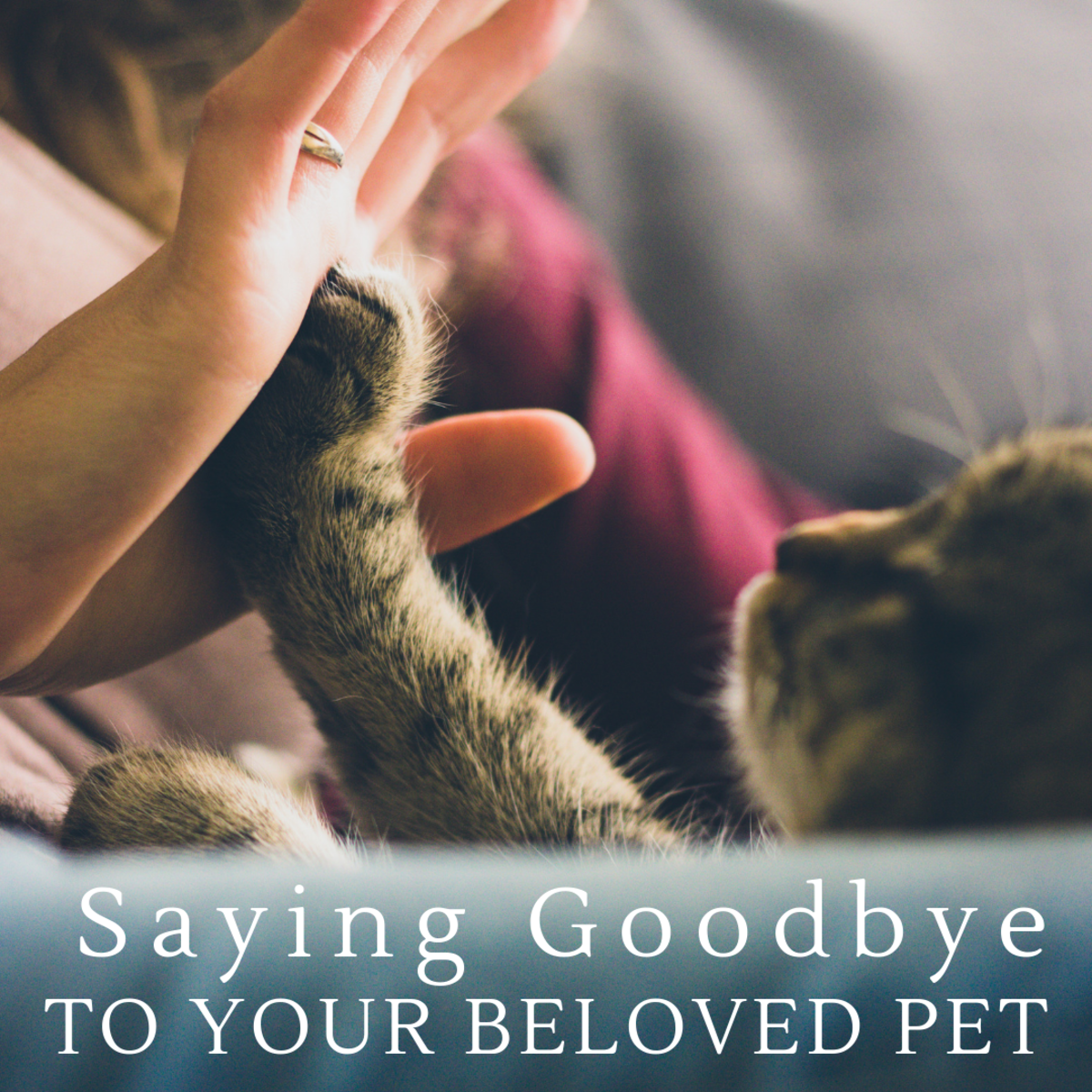Saying a final farewell to a pet you love is painful.