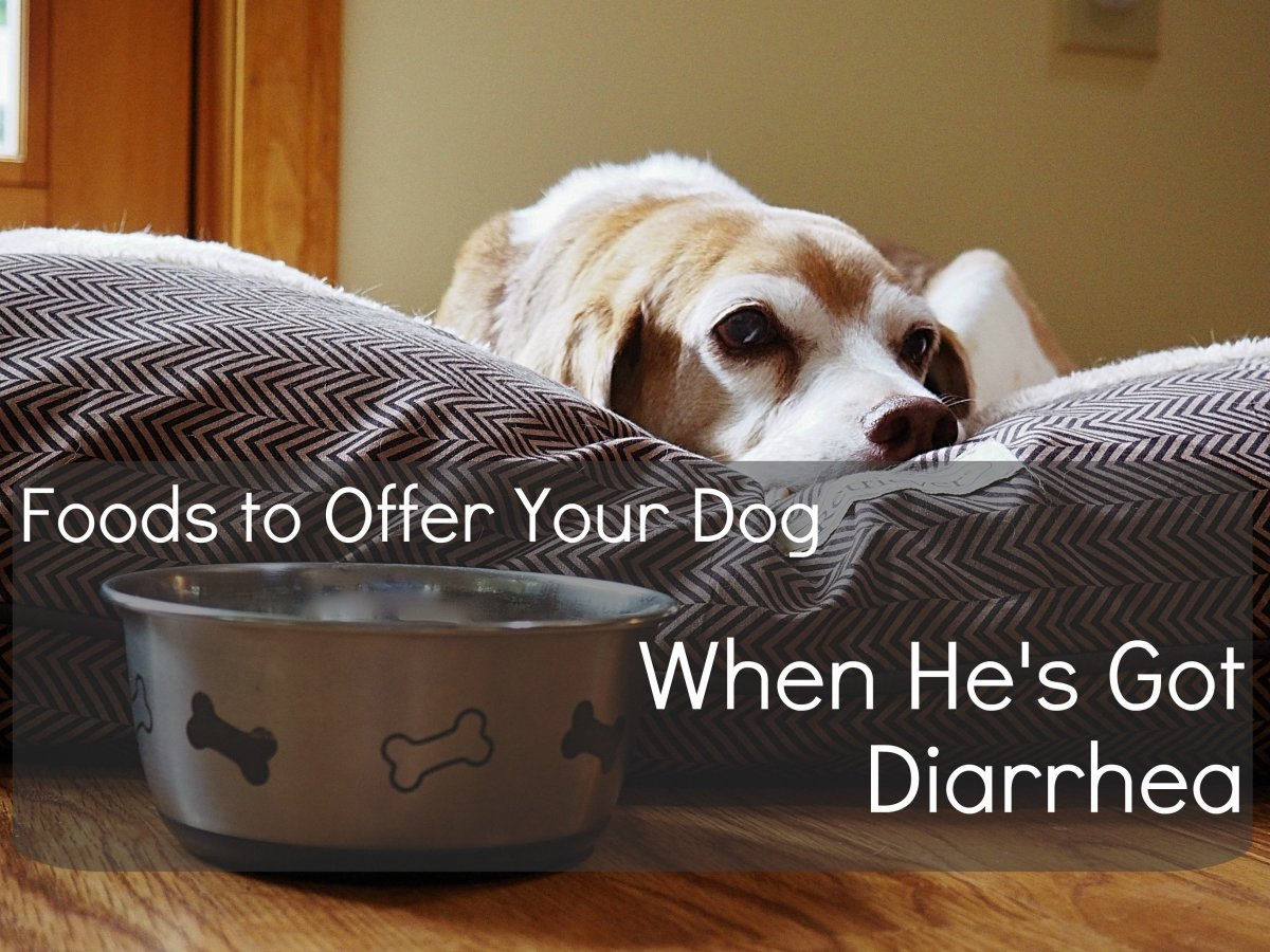 12 Human Foods to Give to Dogs With Diarrhea or Upset Stomach