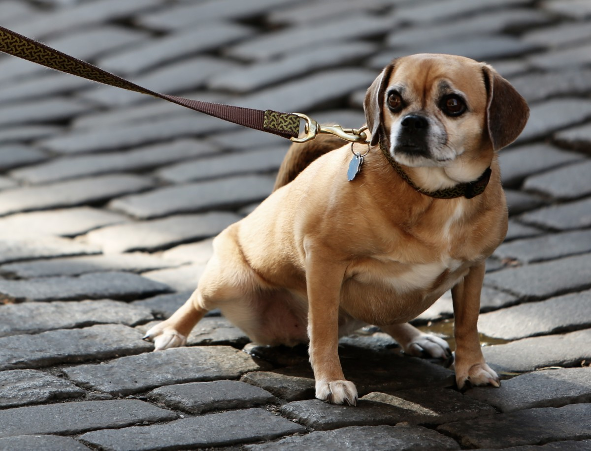 Managing Fears, Phobias and Anxieties in Your Dog