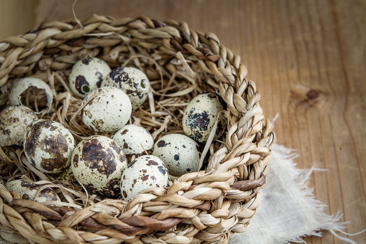 A basket of quail eggs