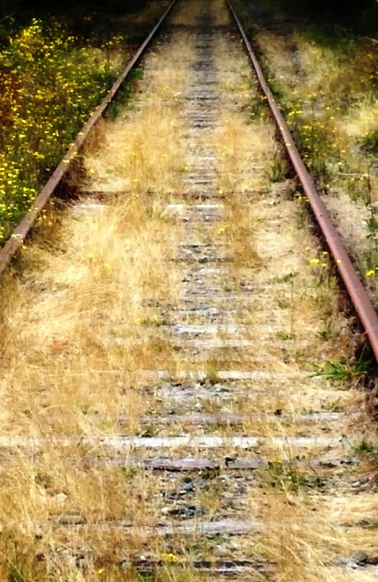 A piece the of E&N Railroad through the Comox Valley