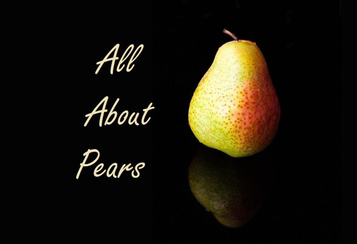 Pears have been cultivated (and loved) for eons. Read on to find out why.