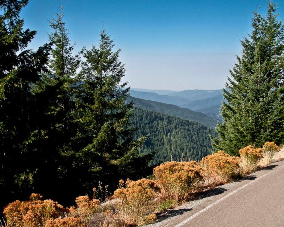 Bear Camp Road: