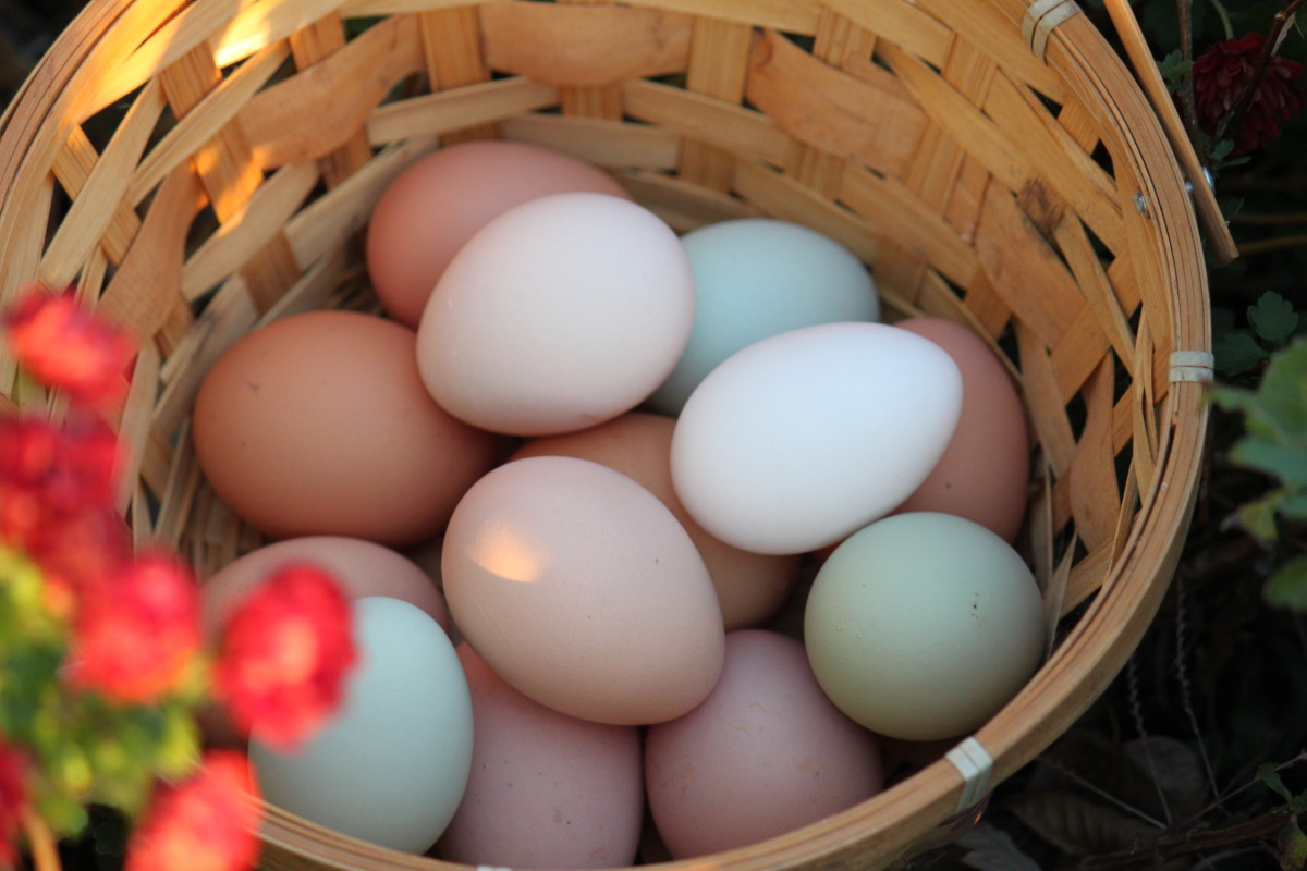 Eggs come in many colors, including white, brown, blue, and green.