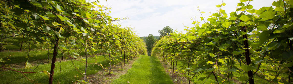 Wine Tasting Near Burlington, Vermont