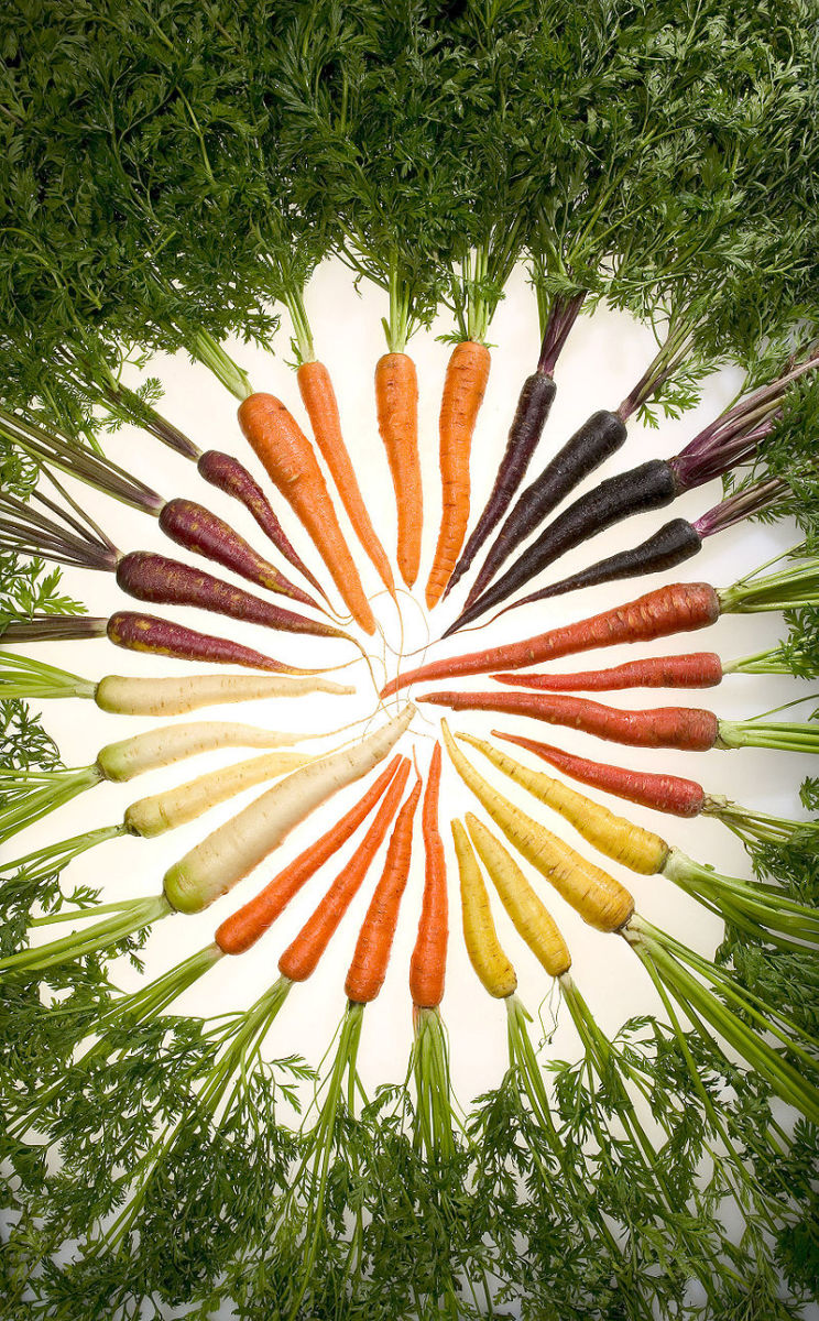 Various colors of carrots