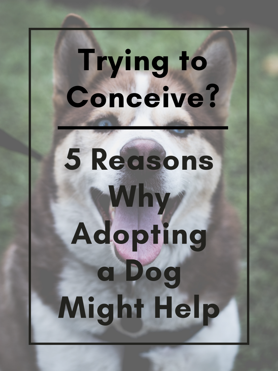 This article will break down five great reasons why trying-to-conceive (TTC) couples should consider adopting a dog.