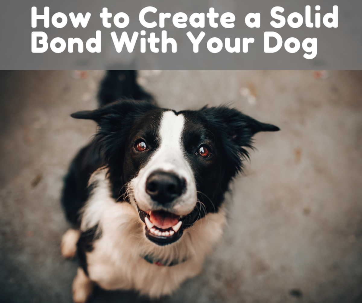 How and Why You Should Create a Solid Bond With Your Dog