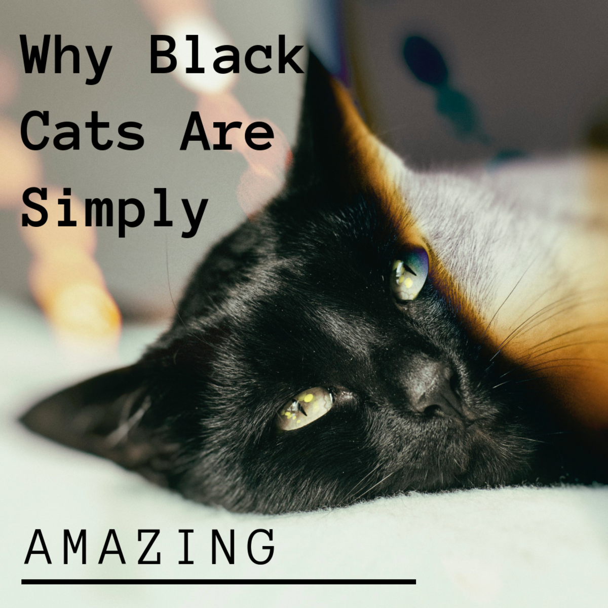 Why Adopt a Black Cat? Black Cat Appreciation Day