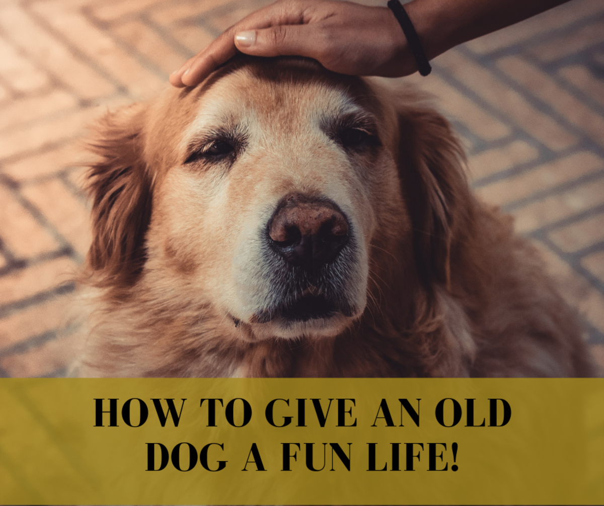Old dogs can still have fun. Read on to learn how to show your old dog the time of his life!