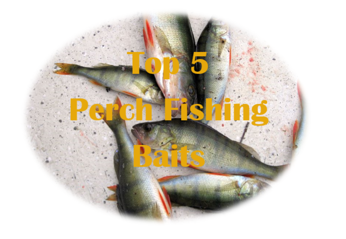Top 5 Best Perch Baits