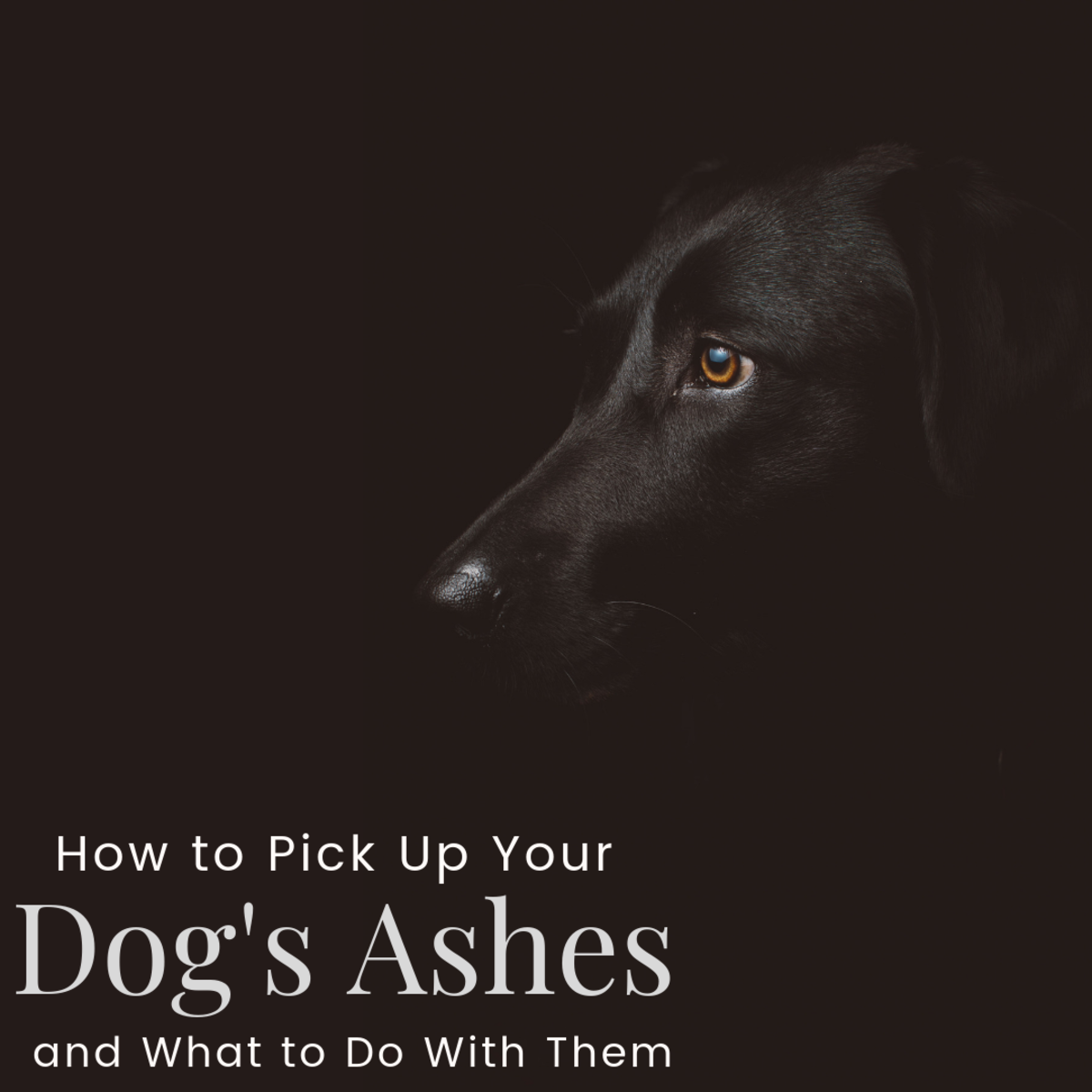 Picking Up Your Dog's Ashes Can Be Difficult