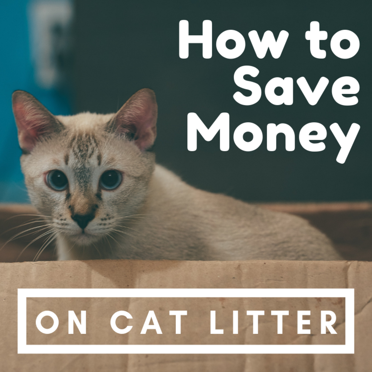 Cat costs can add up fast, and litter is one of the biggest expenses of the bunch.