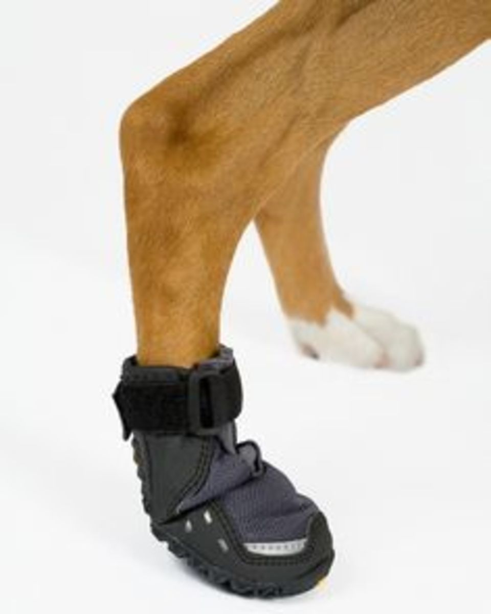 Dog booties to protect their sensitive paws.