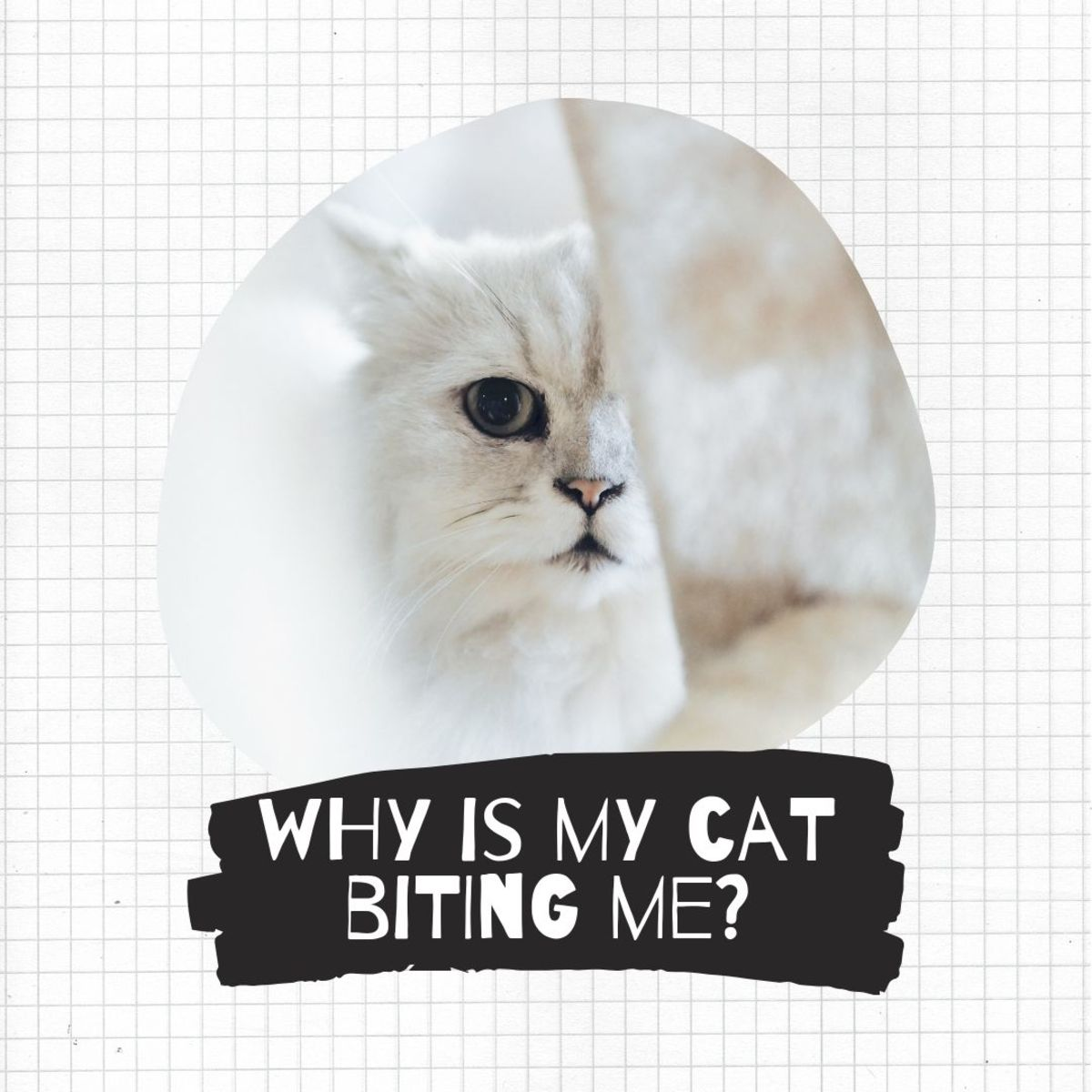 Find out why your cat is biting you and how to deal with it.