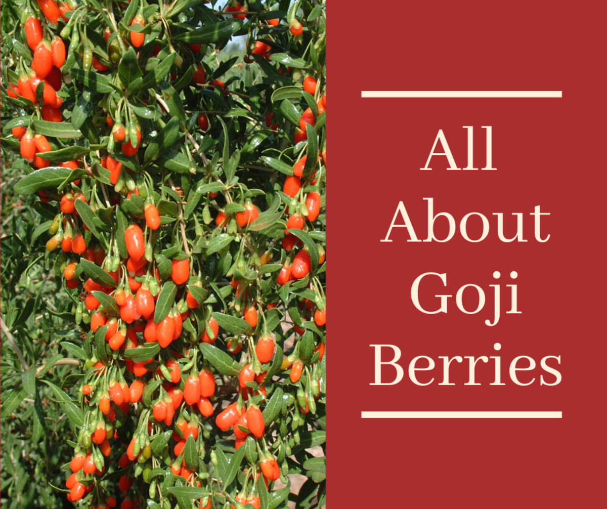 Goji Berries: Information and How to Dry This Versatile Superfood