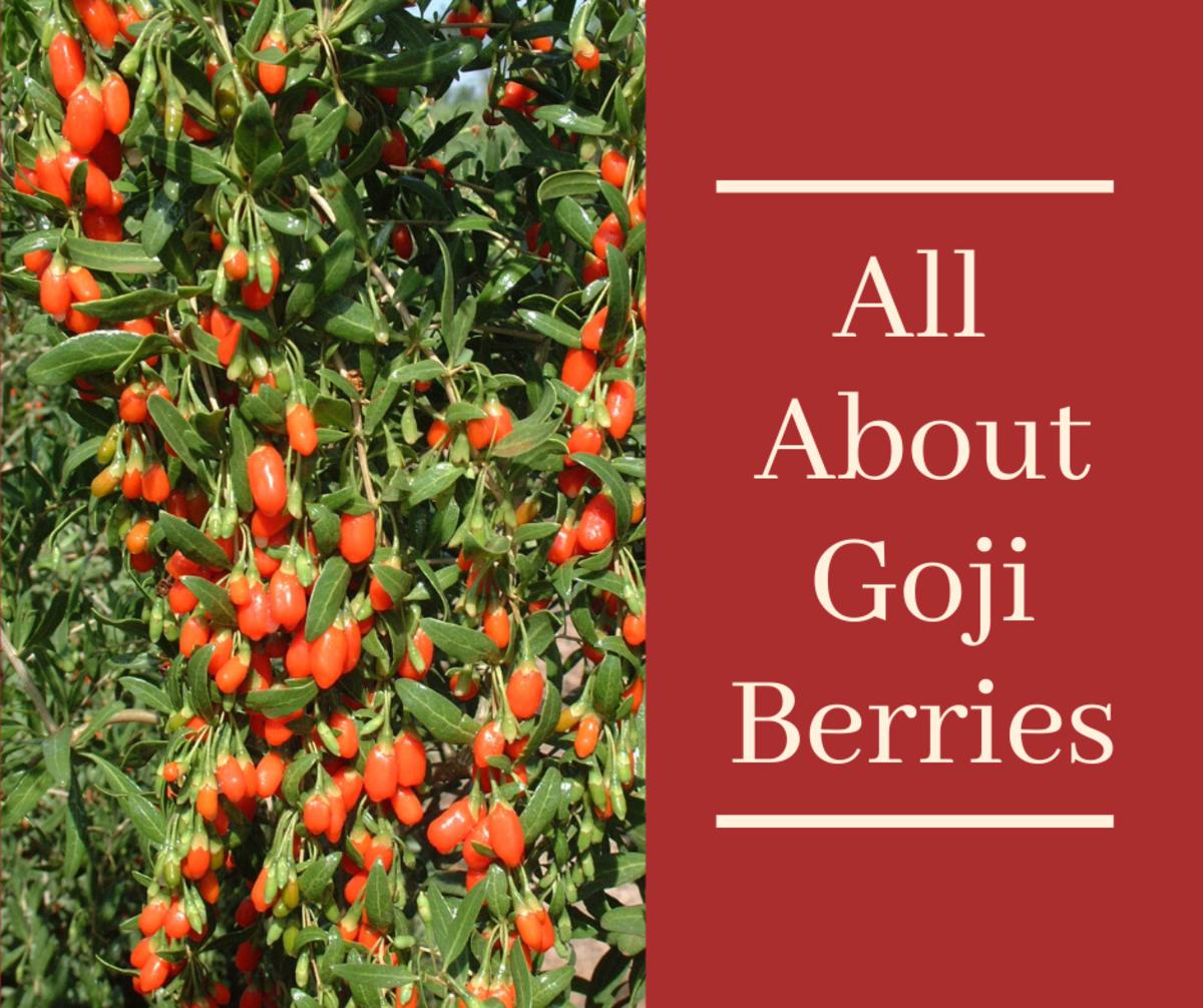Lycium barbarum berries (Tibetan goji) from Ningxia