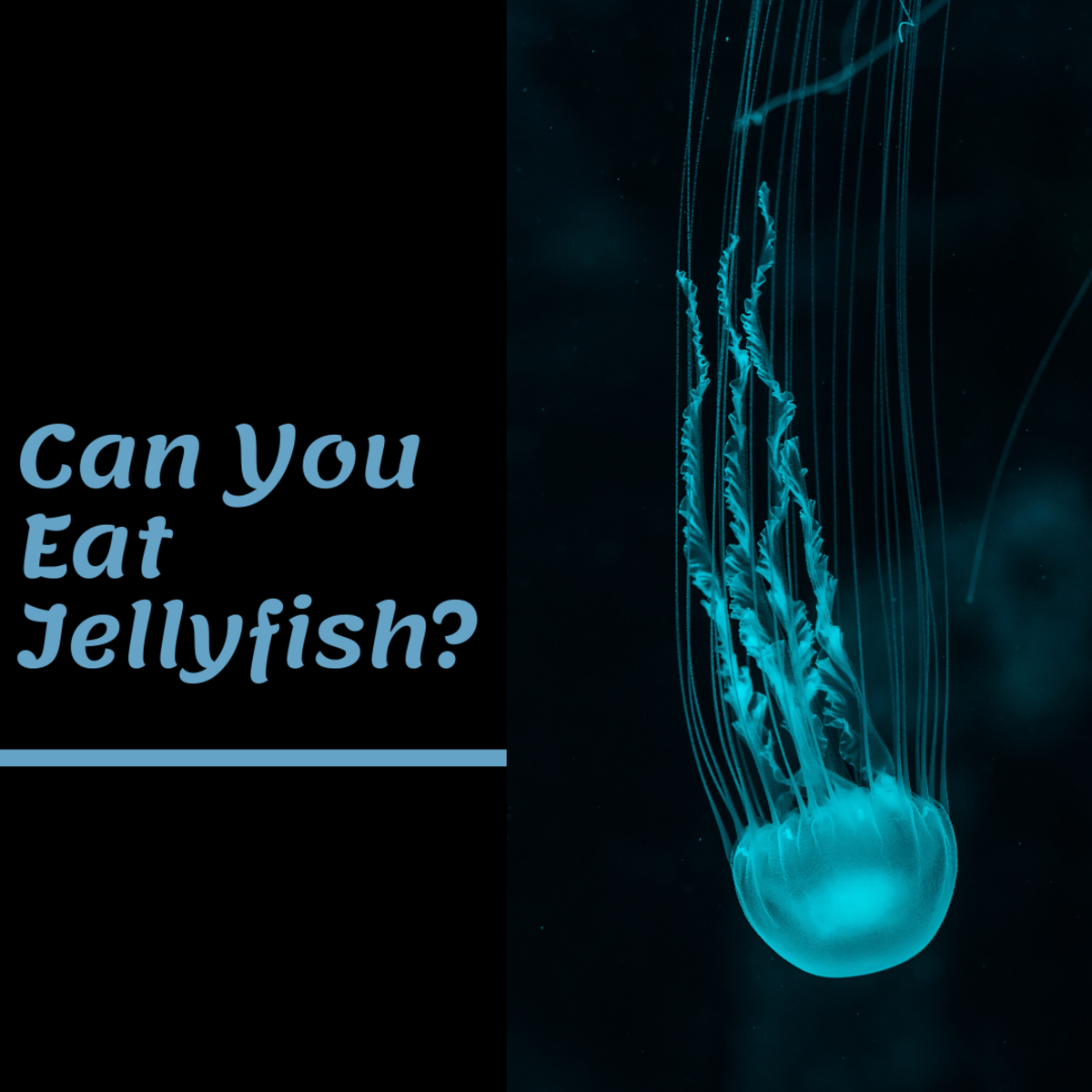 Can You Eat Jellyfish? (Includes Recipes)