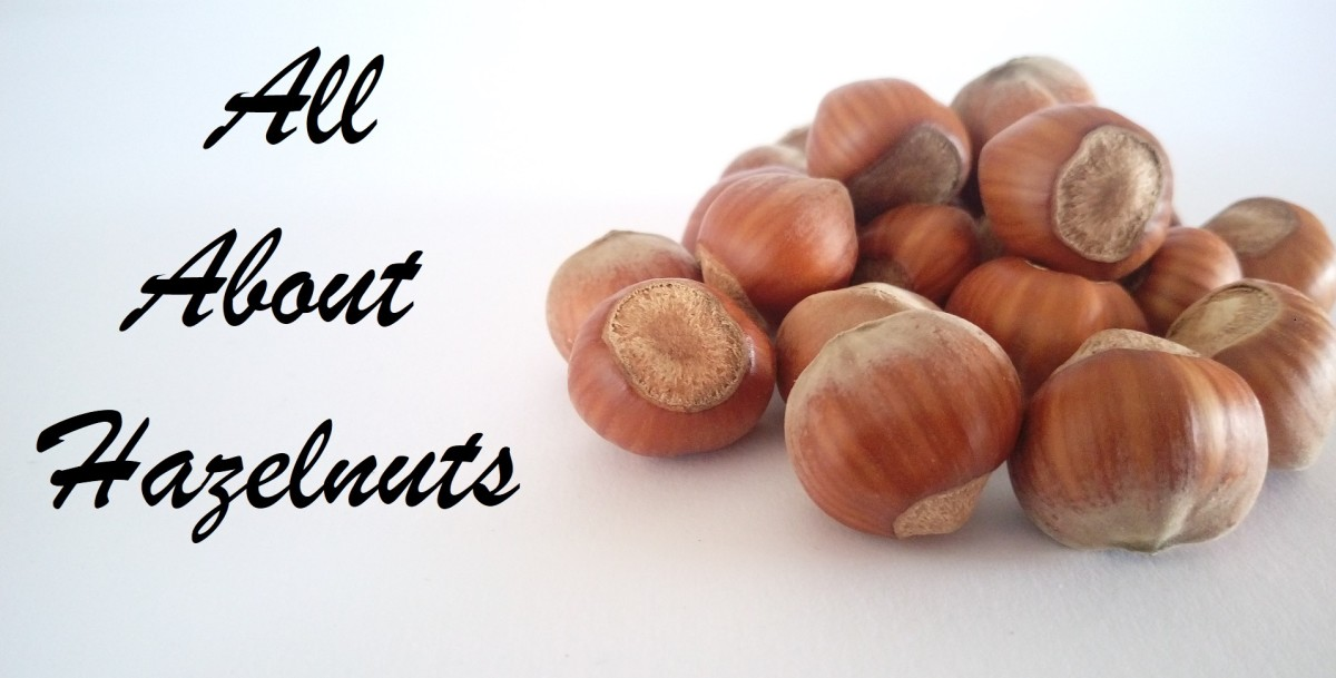 Hazelnuts can be used to make many many different meals