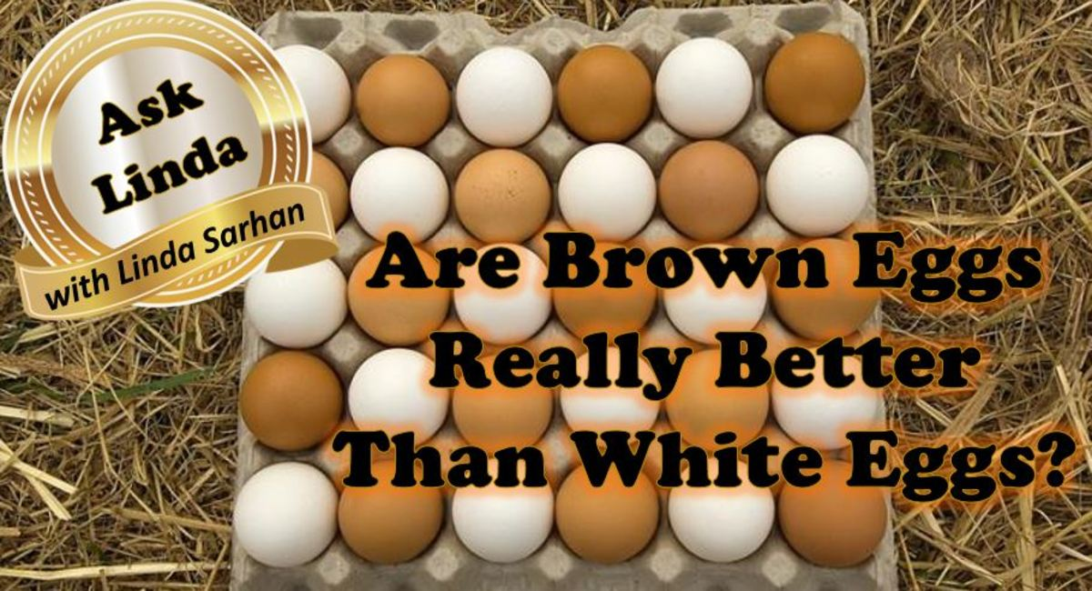 are-brown-eggs-better-than-white-eggs