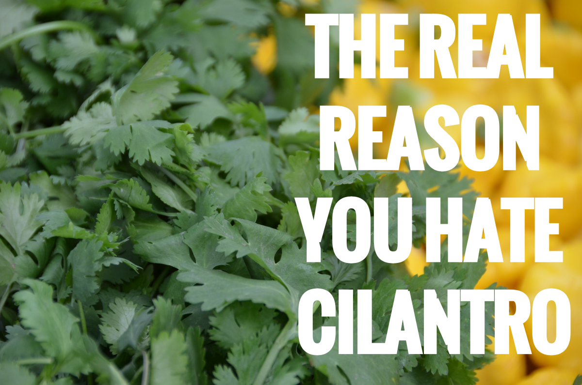Why does cilantro taste bad?