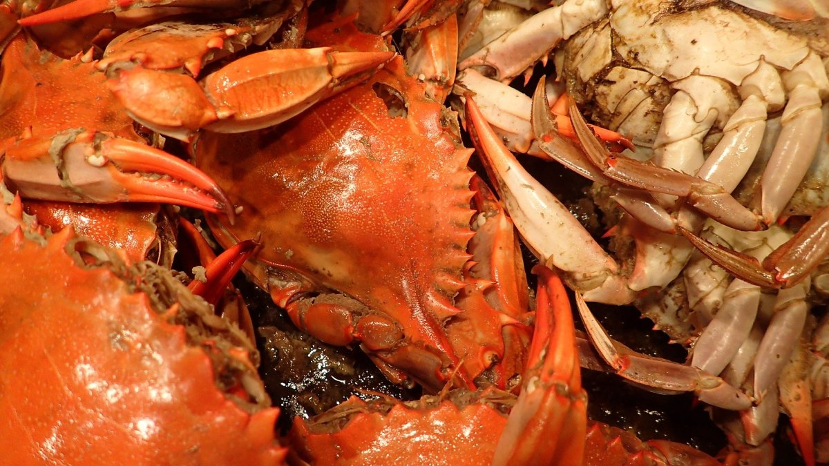 Dungeness Crab: Cook, Clean, and Create Great Recipes