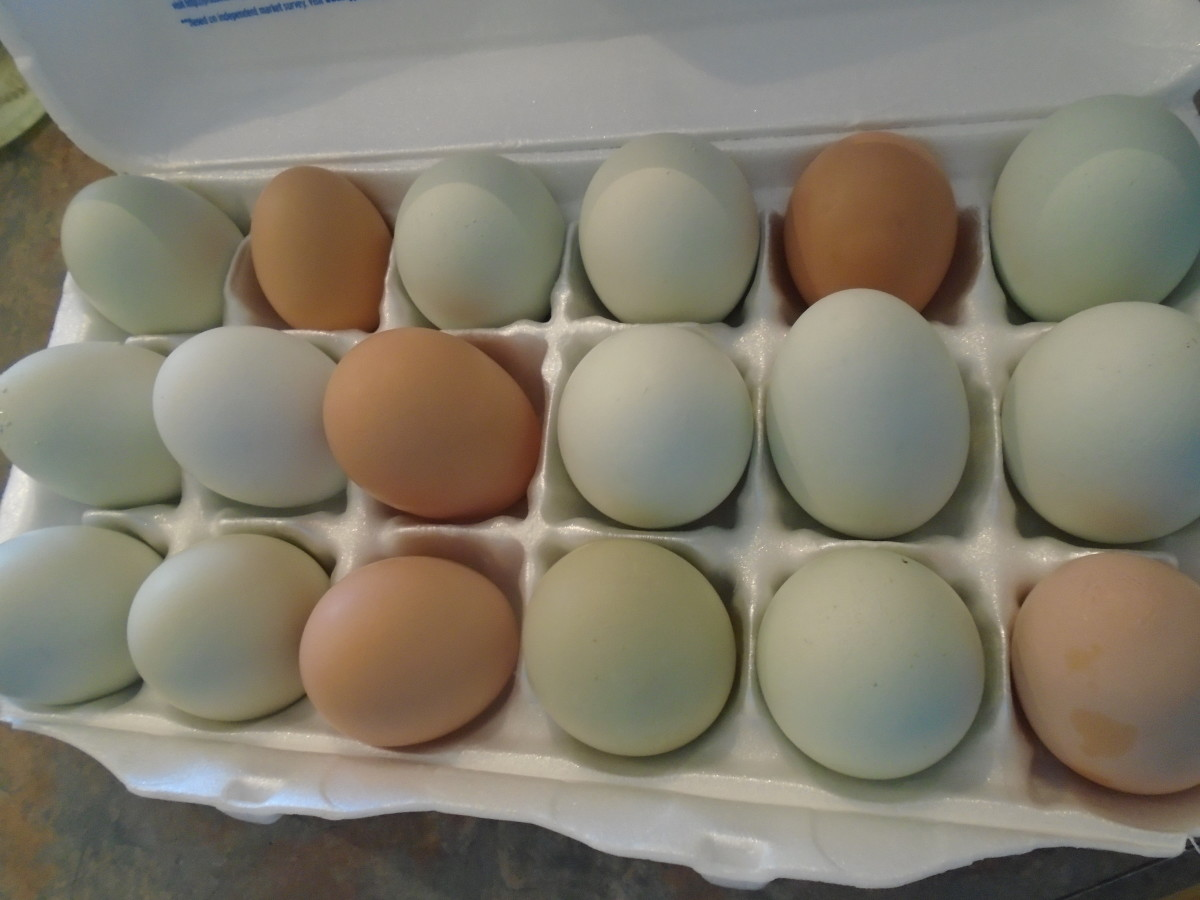 A sample of my hens' lovely, fresh, cage-free eggs showing the rich variety of size, color, and shape that naturally occurs.