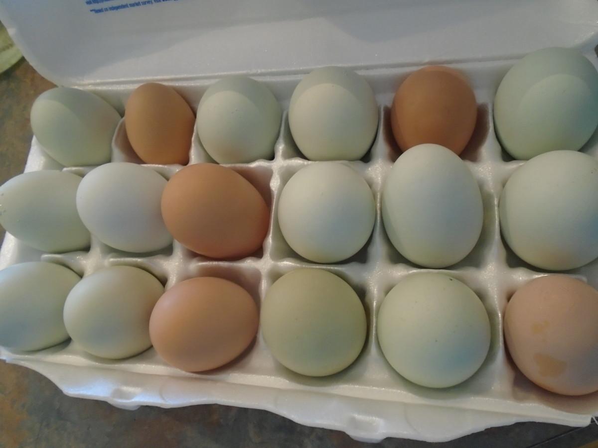 A Fresh Egg Primer