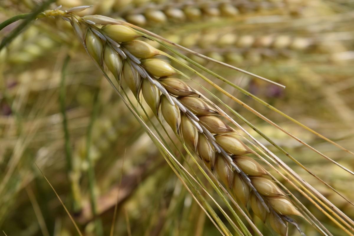 Survival Skills: Long Term Food Storage of Grains