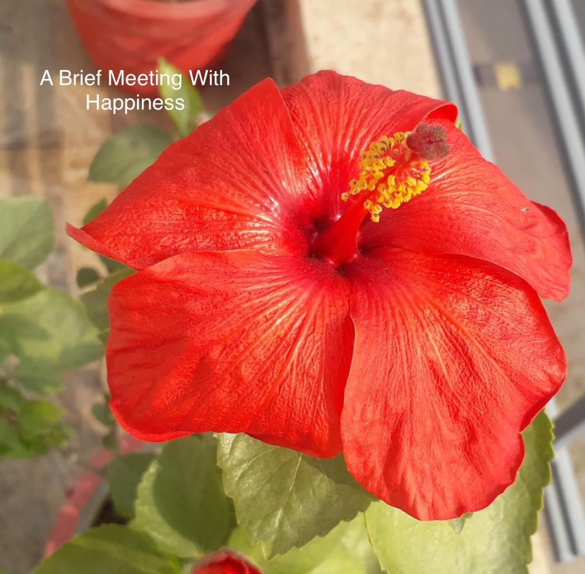 Happiness is short lived, just like a blooming flower.