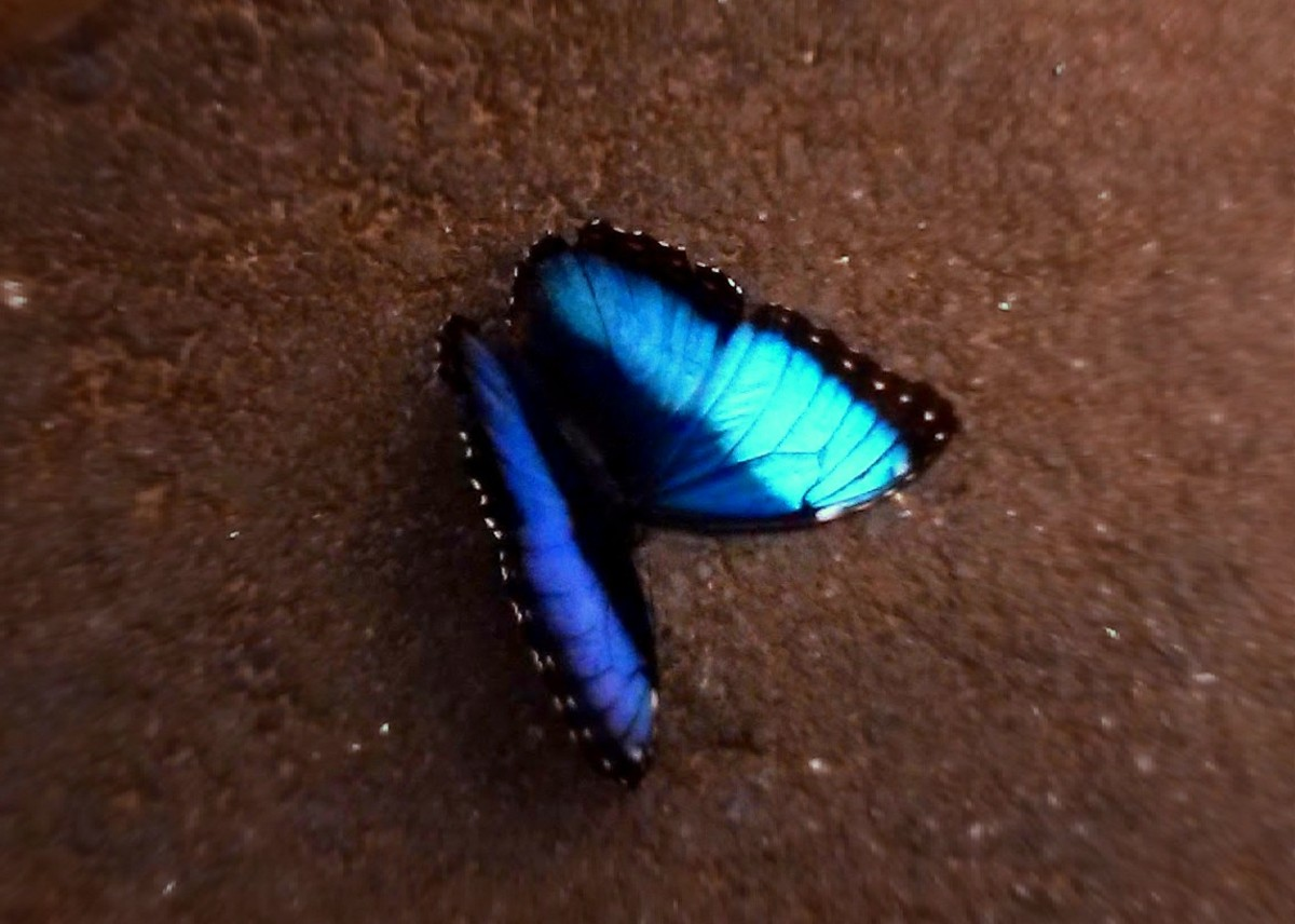 Butterfly Fate