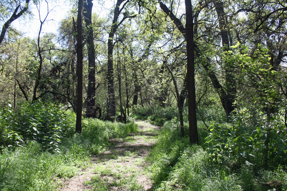 Caswell Memorial State Park features winding trails through stands of trees along the Stanislaus River.
