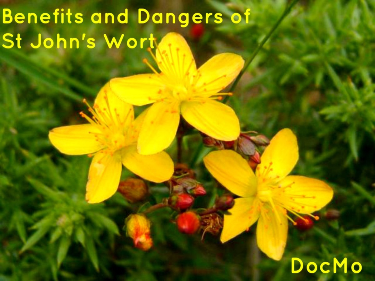 The Uses, Benefits and Dangers of St John's Wort
