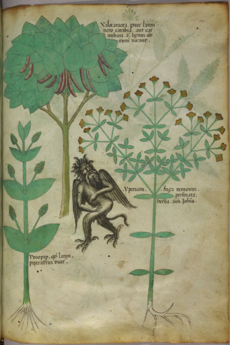 A 15th century herbal codex that lists 'ypericon' (St John's Wort) as a demon repellant!