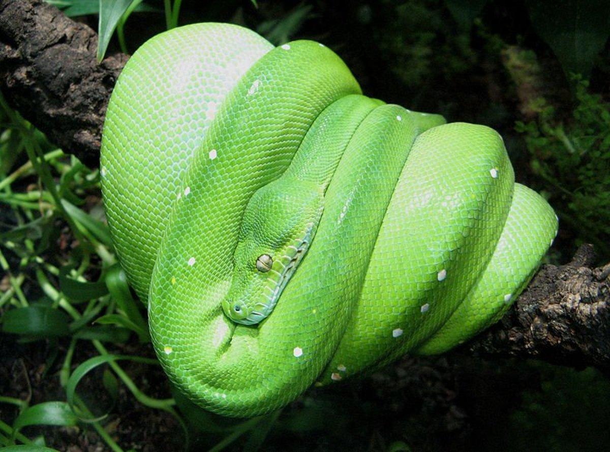 9 Worst Pet Reptiles for Beginners | PetHelpful