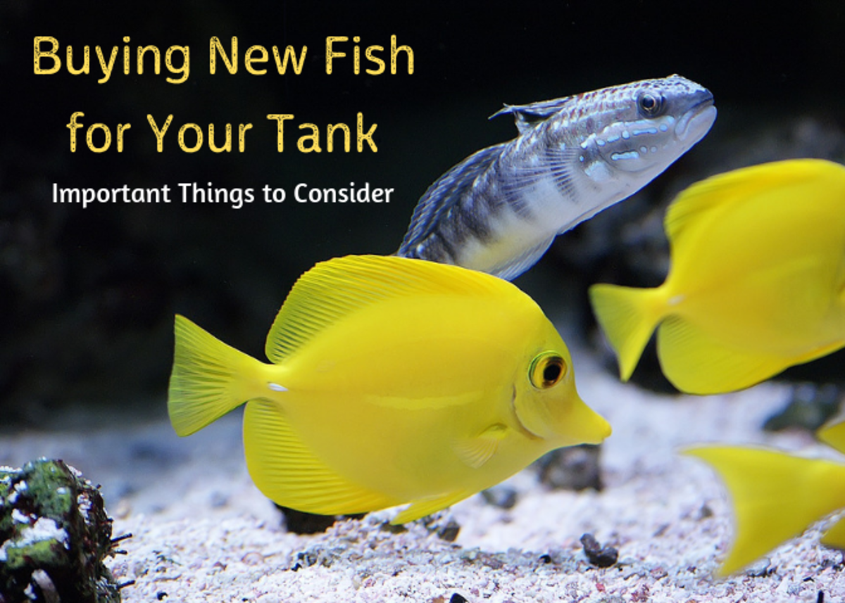Get some ideas of things to think about before you buy new fish for your aquarium.