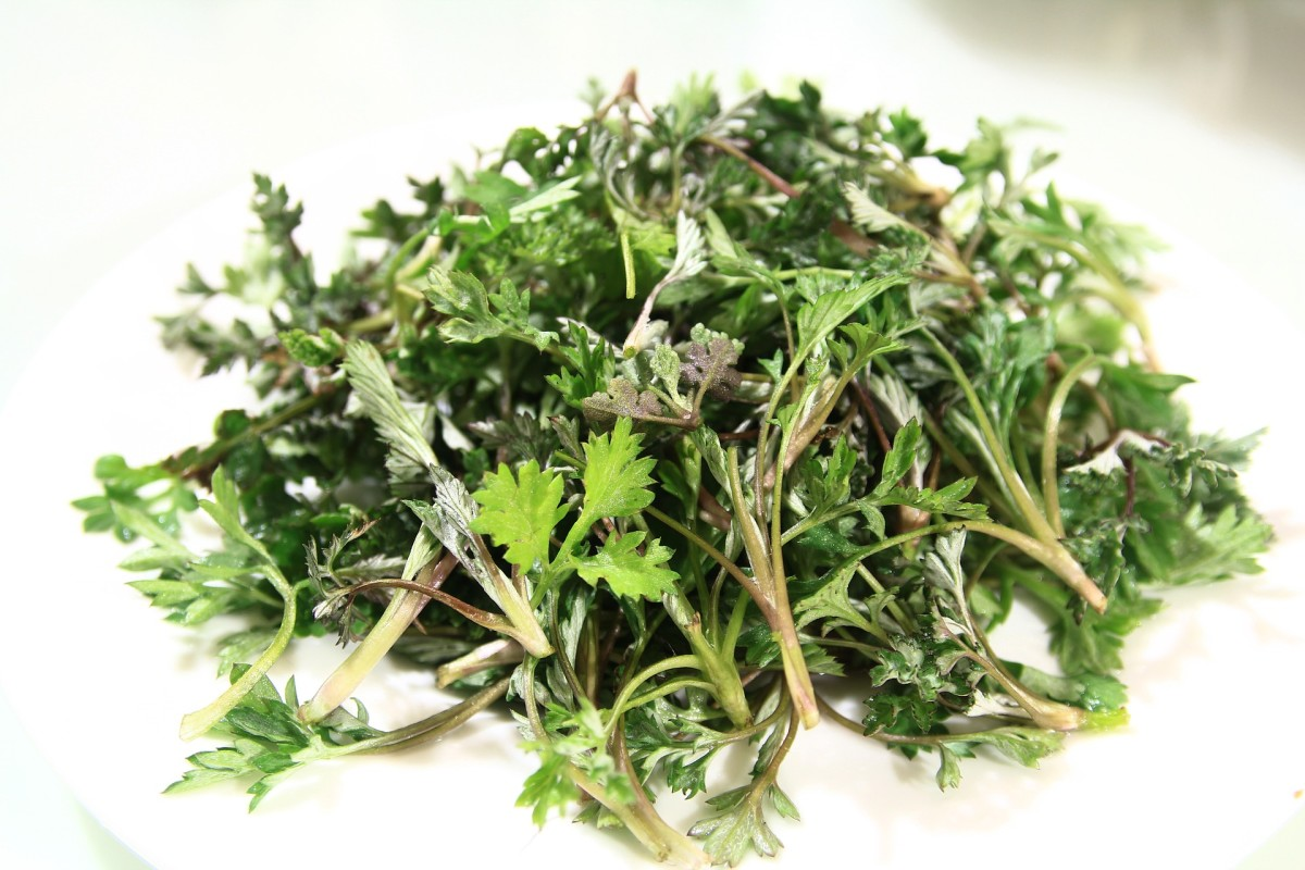 Wormwood is not only useful at treating cold and flu symptoms, but, as the name suggests, it can be used to rid humans of parasitic worms.