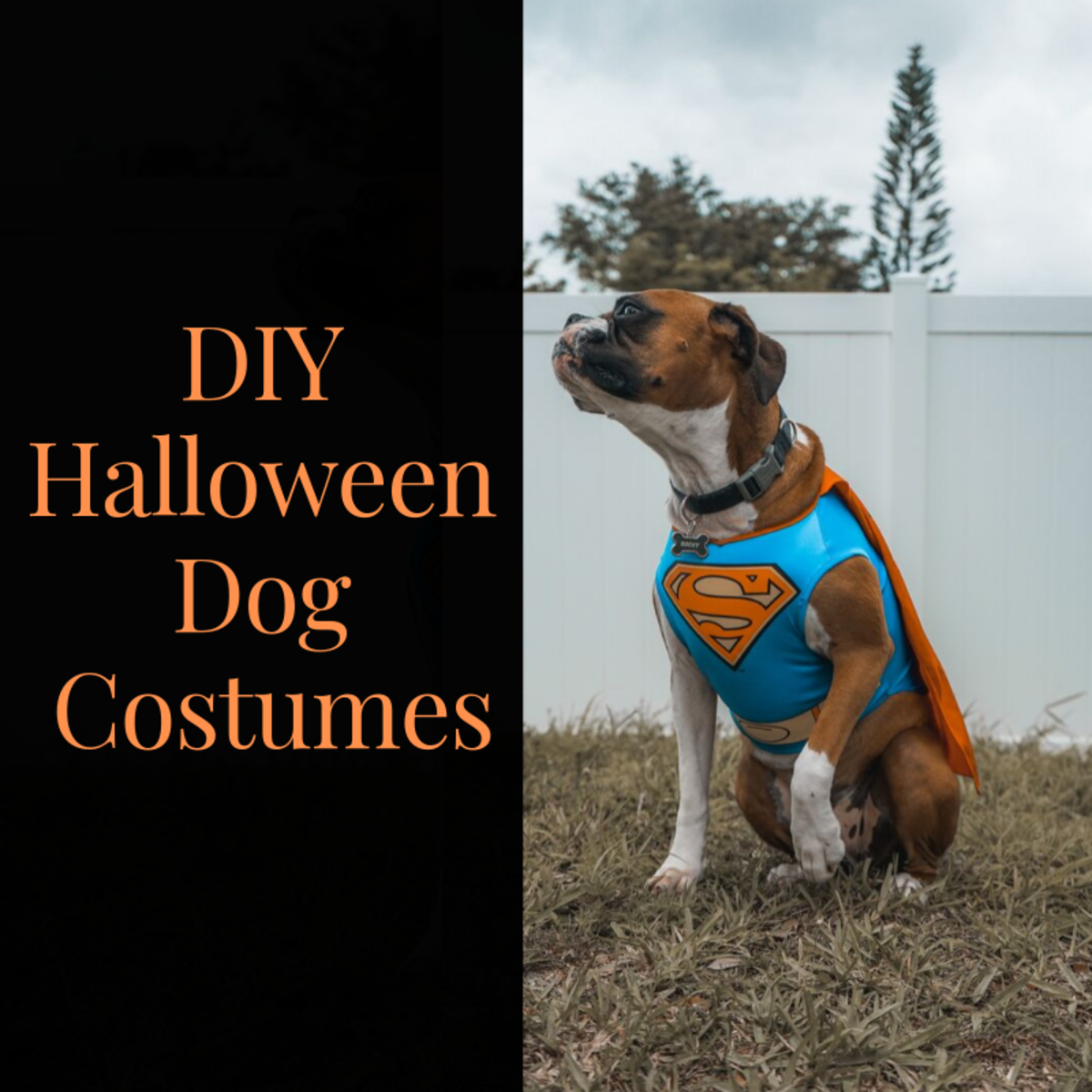10 DIY Halloween Dog Costumes That Won't Drive Them Crazy